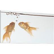 Akustik-Bild, Goldfische, 1600x800 mm