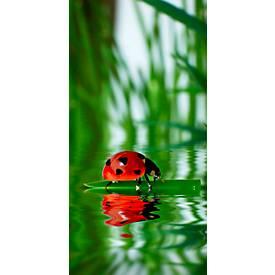Akoestisch fotopaneel, lieveheersbeestje, 800 x 1600 mm