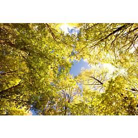 Deckensegel, Wald, 1200x800 mm